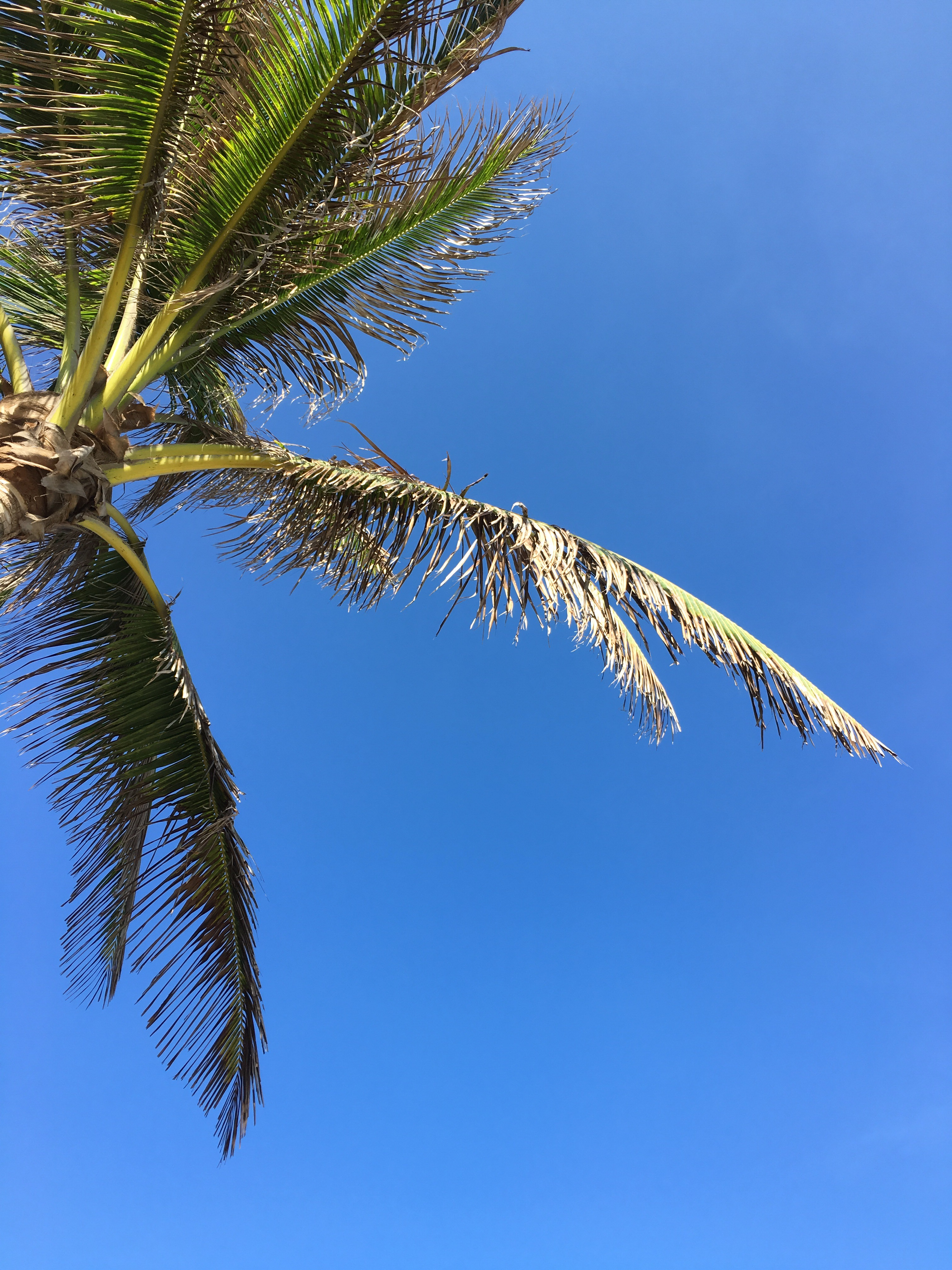 Palm_tree_blue_sky_Con_Dao_Vietnam
