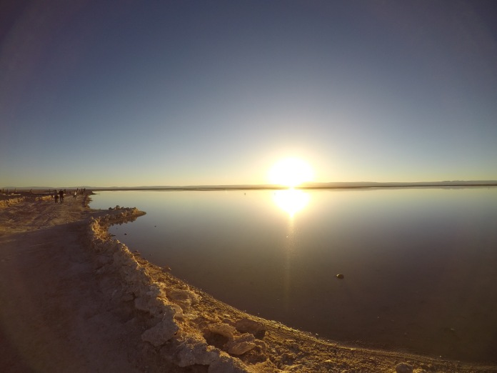 Flamingo_Chile_Sun_Salar_de_Atacama_salt_flat