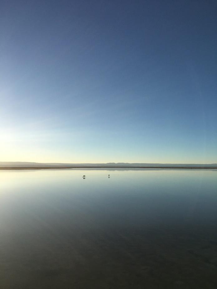 Flamingo_Chile_Sun_Salar_de_Atacama_salt_flat_2